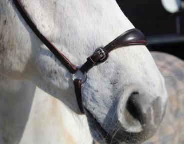 Drop Noseband, Adjustable, padded and lined, leather